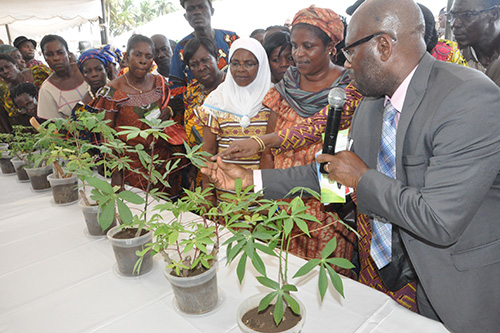 WAVE-COTE D'IVOIRE IN ACTION: Awarness campain against root and tuber crops diseases in Côte D'Ivoire