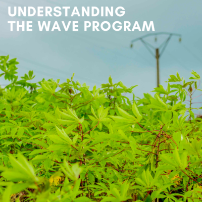 Picture Understanding the WAVE program