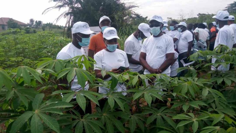 WAVE Project: CRI-Kumasi Trains Agric Officers To Track Cassava Disease